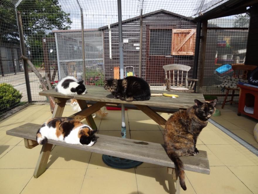 Group sunbathing