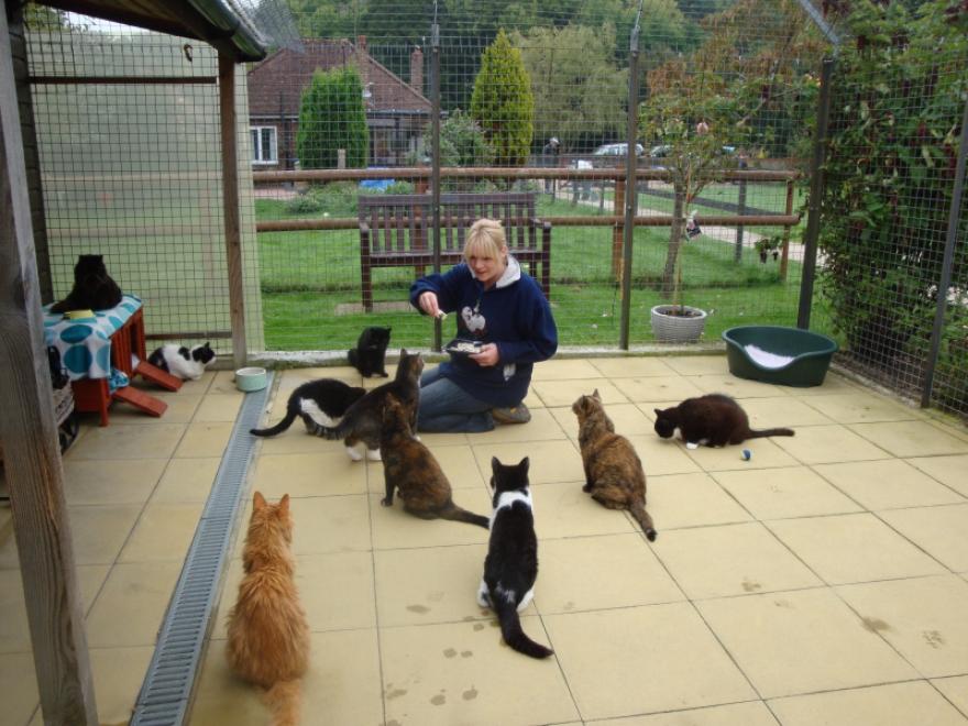Helen & cats
